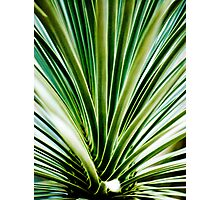 Green One Photographic Print