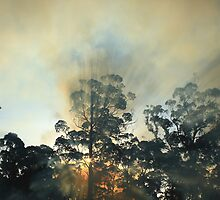 Montagu bush fire , far nor west coast Tasmania , Australia by phillip wise