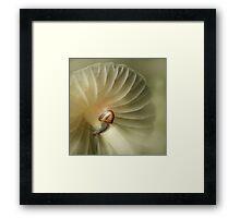 The tiny snail Framed Print