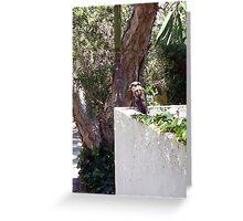 Kookaburra On My Mother's Wall - 19 11 12 Greeting Card