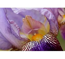 From the Garden - Iris 3 Photographic Print