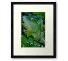 From the Oak Tree Framed Print
