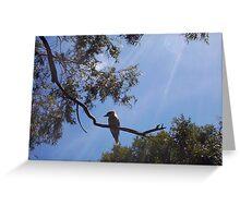Kookaburra On My Street - Nine - 19 11 12 Greeting Card