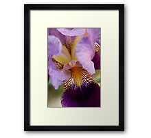 From the Garden - Into the Iris Framed Print