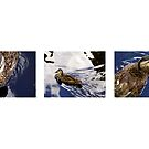 Duck Triptych by Michelle Ricketts