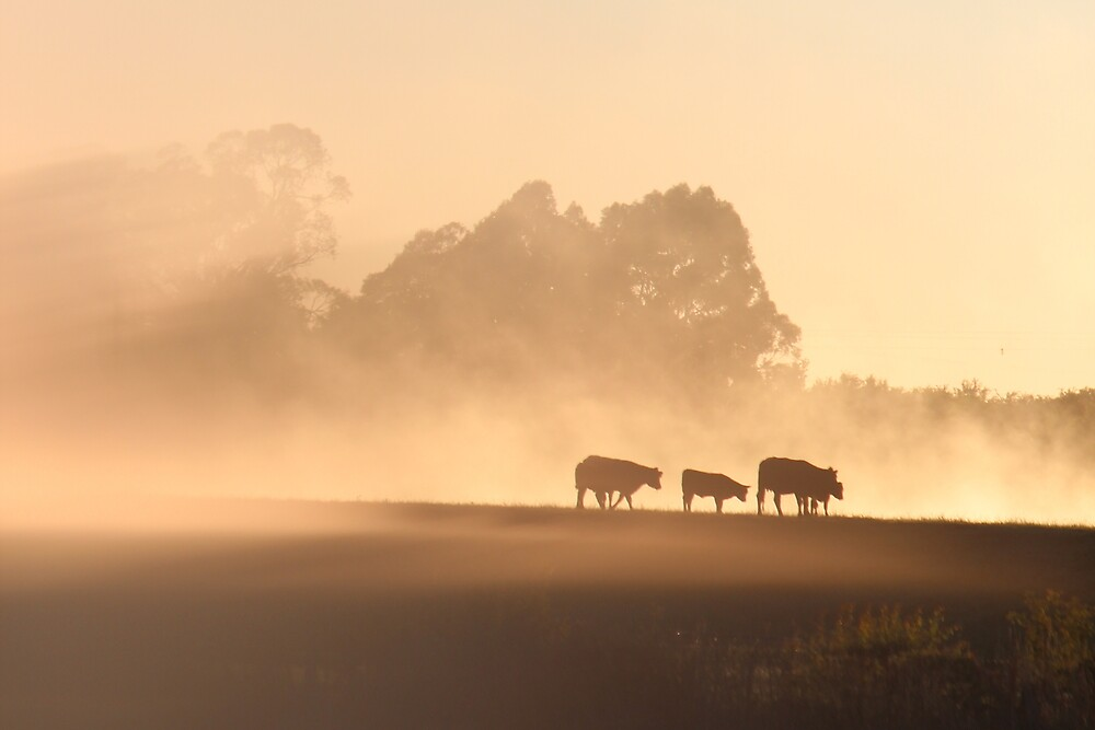 misty dawn in the paddock - lovely light by gaylene