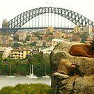 Sydney Tahrs by Crin