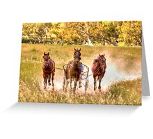 Dust What Dust  ~ Horses ~ Rural NSW Australia  Greeting Card