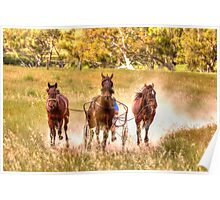 Dust What Dust  ~ Horses ~ Rural NSW Australia  Poster