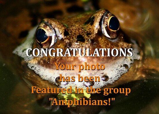 Banner - Amphibians group challenge! by AnnDixon