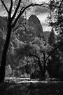 View To Cathedral, Yosemite National Park by Vince Russell