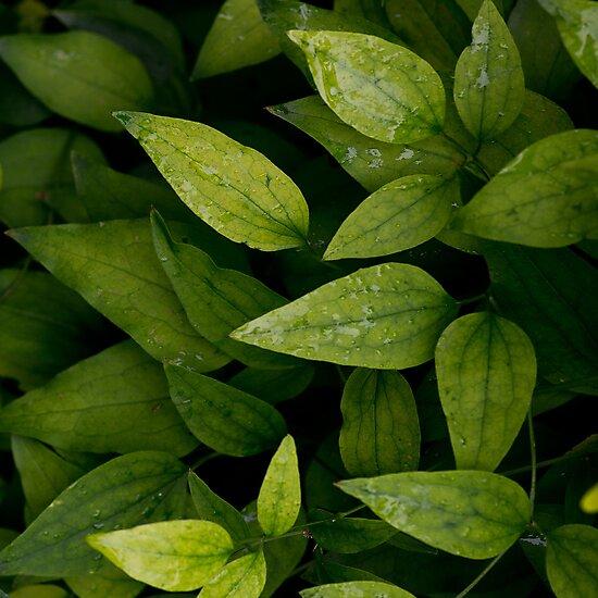 foliage by kavolis