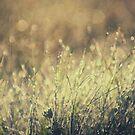 morning dew by kavolis