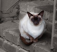 Cat on the Back Step by Helen Barnett
