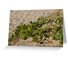 Sand-dune Plants Greeting Card