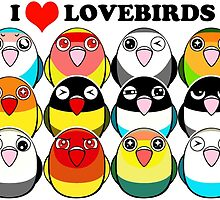Lovebird colour mutations by lifewithbirds