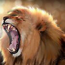 The Royal Yawn by Peyton Duncan