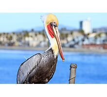 Brown Pelican on Oceanside Pier Photographic Print