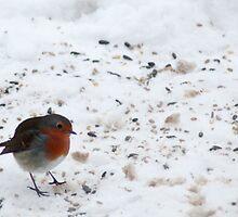 Christmas with a Robin by Steve Hammond