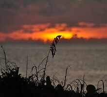 Lone Sea oat in the Sunrise  by khphotos