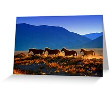 Mustang Trail Greeting Card