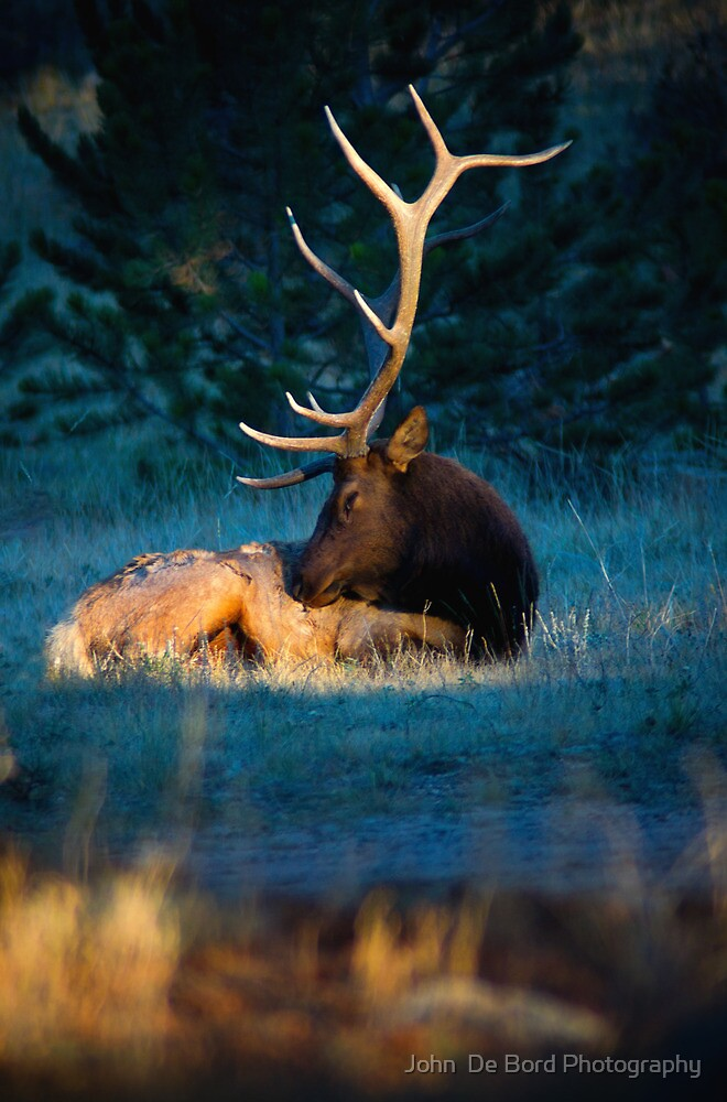 Relaxing In The Morning Light Of Autumn by John  De Bord Photography