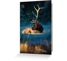 Relaxing In The Morning Light Of Autumn Greeting Card