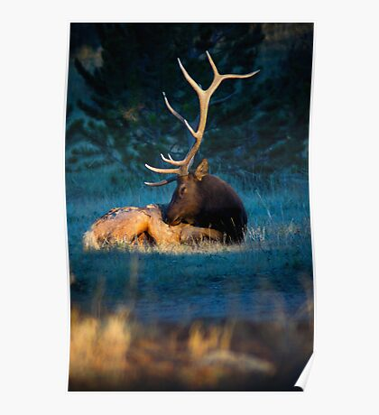 Relaxing In The Morning Light Of Autumn Poster