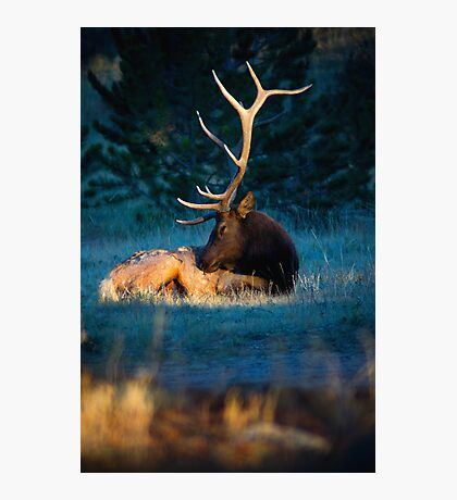 Relaxing In The Morning Light Of Autumn Photographic Print