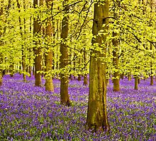 Bluebells Wood 09 by lc-photo