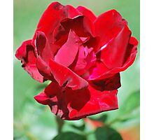 Beauty Of Red Photographic Print