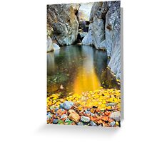 wild beauty of autumn in deep forest Greeting Card