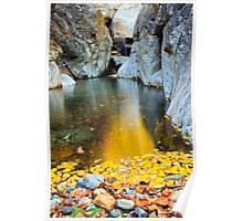 wild beauty of autumn in deep forest Poster