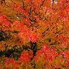 Colours of Autumn 2 by Alex Cassels
