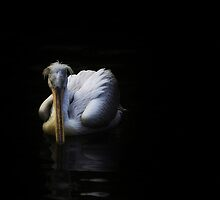 Silent Black by Delfino