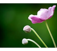 Pink Summer Flowers Photographic Print