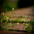 Tiny Wall Moss by TehRen