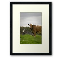 Staring Cows Framed Print