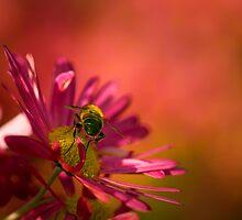 Bright Bee, Bright Flower by TehRen