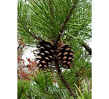 Pinecones Photographic Print
