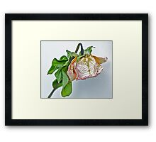 One Dried Rose Framed Print