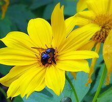 Bee Yellow by AuntDot