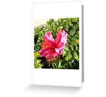 Flower at Venice Beach ~ Personal Photography Collection Greeting Card
