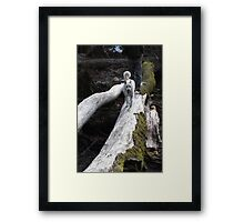 Luna at Bear Creek Framed Print
