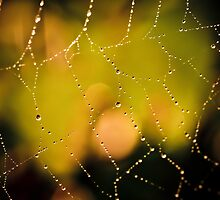 Spider web with rain drops by marina63
