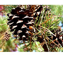 Lady Bug Photographic Print