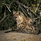 Hyena Den by Michael  Moss