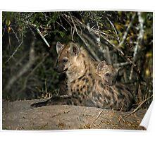 Hyena Den Poster