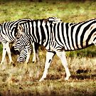 The World of Stripes by Doty