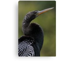 Anhinga Closeup Canvas Print